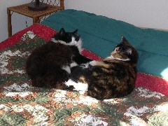 cats on Christmas quilt