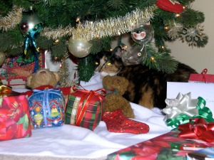 Callie under the tree