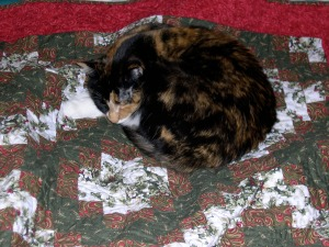 Callie snuggled on Christmas quilt