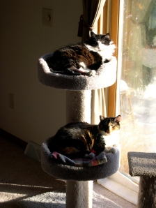 cats on their bunks
