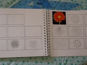daisy thumbnails
