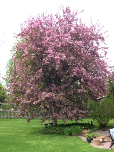 flowering crab tree