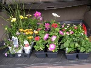 annuals to plant