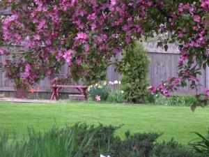 view of backyard through crab apple tree