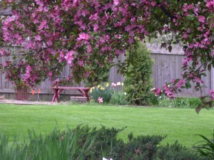 view of backyard through crab apple tree