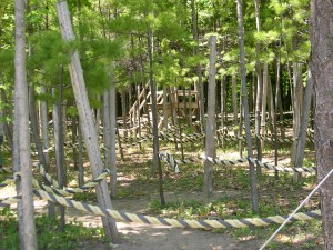 rope maze through the woods