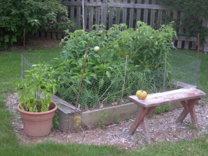 messy veggie garden