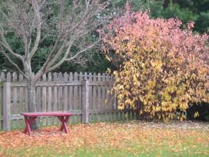 fall scene in backyard