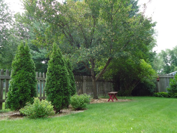 summer park in my backyard