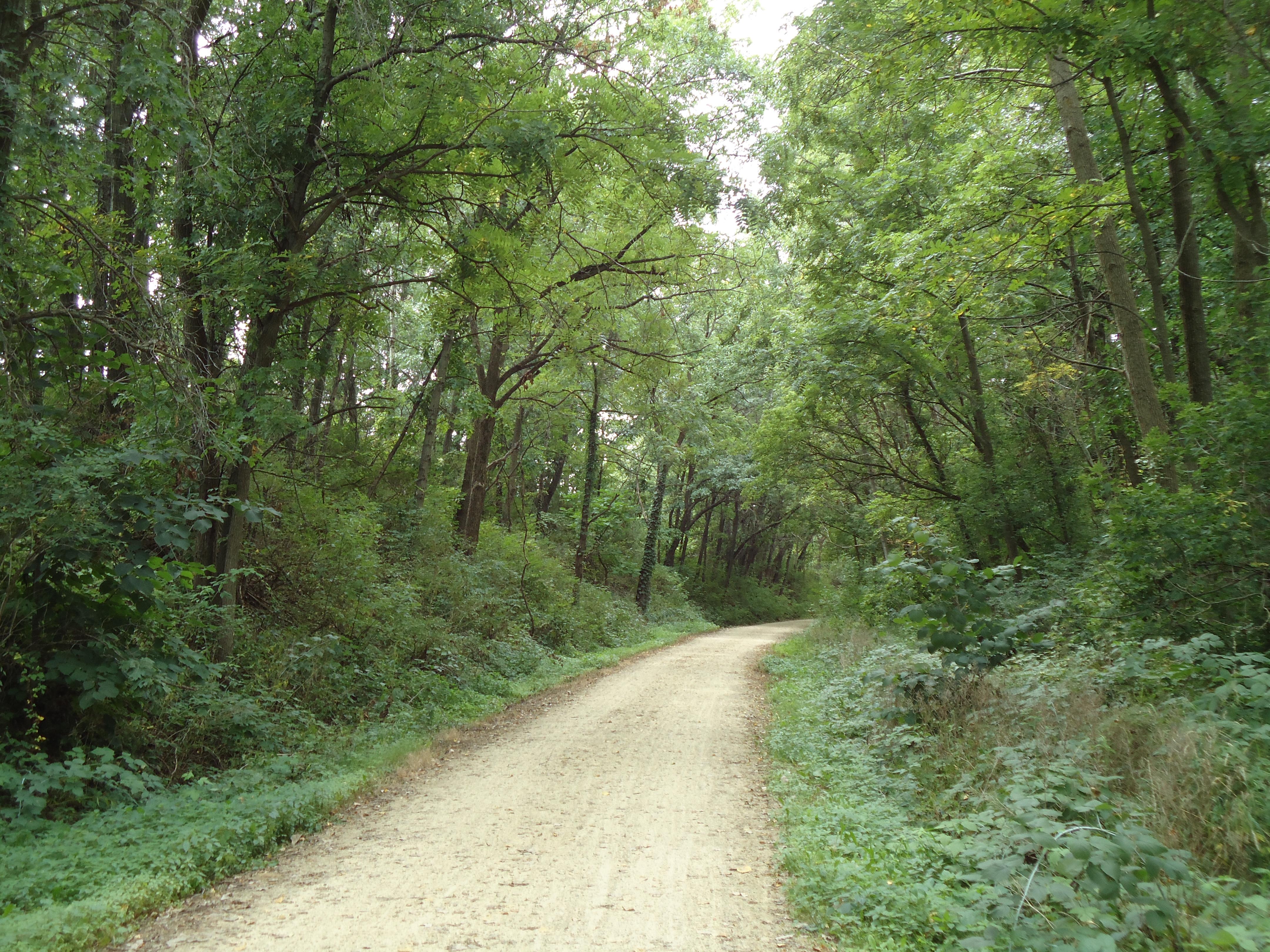 Download The Oregon Trail 2 for Windows (Windows)