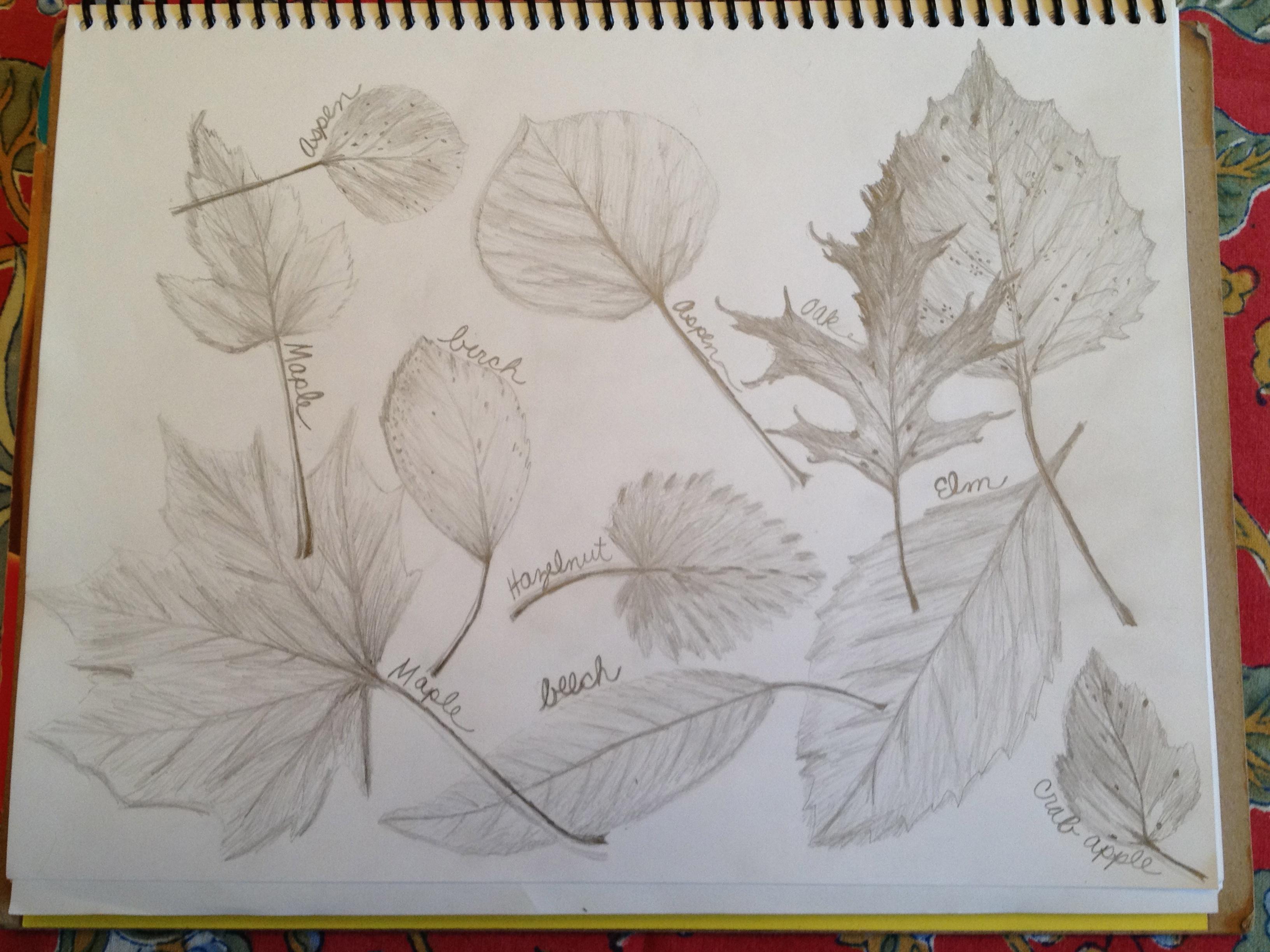 Scattered Leaves Terri S Notebook