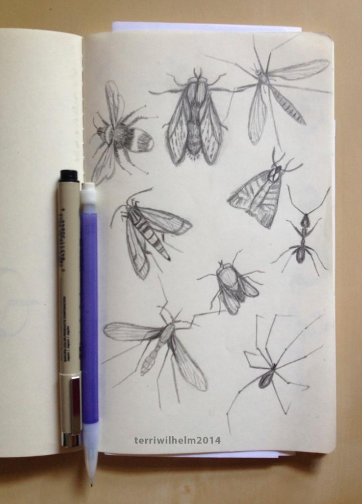 sketchbook-bugs