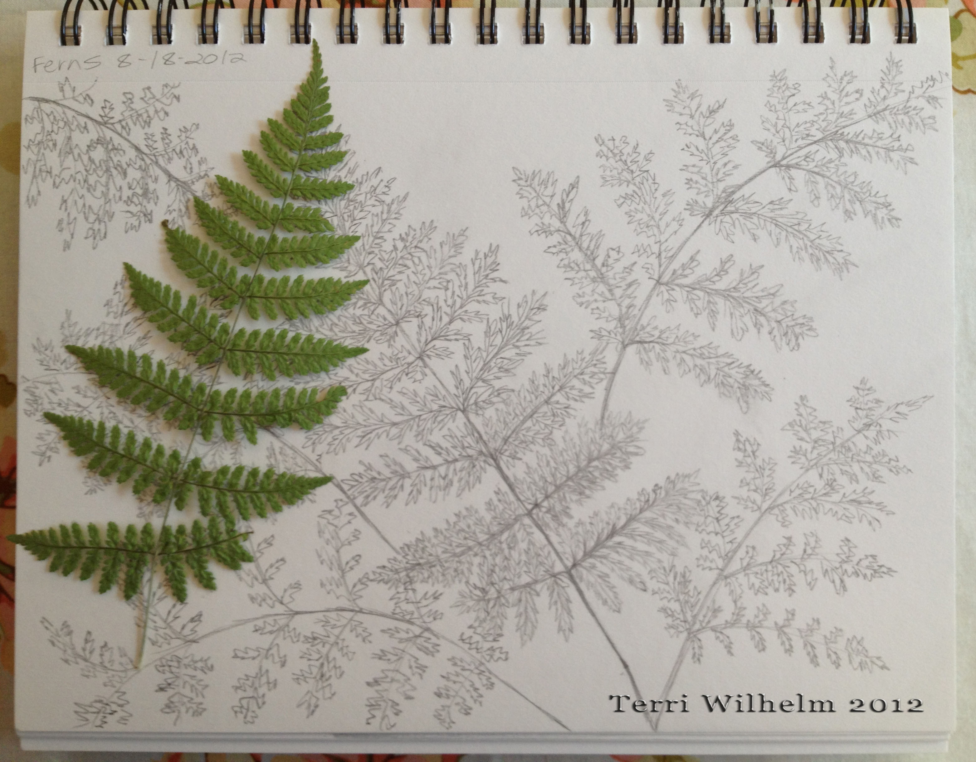 Fern Leaf Drawing I m ...