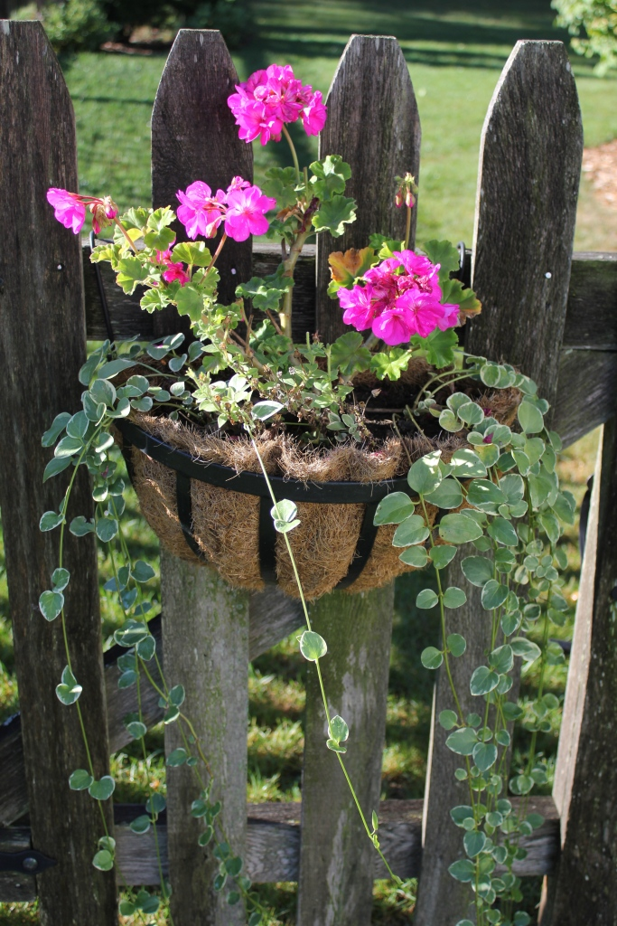 September gate basket