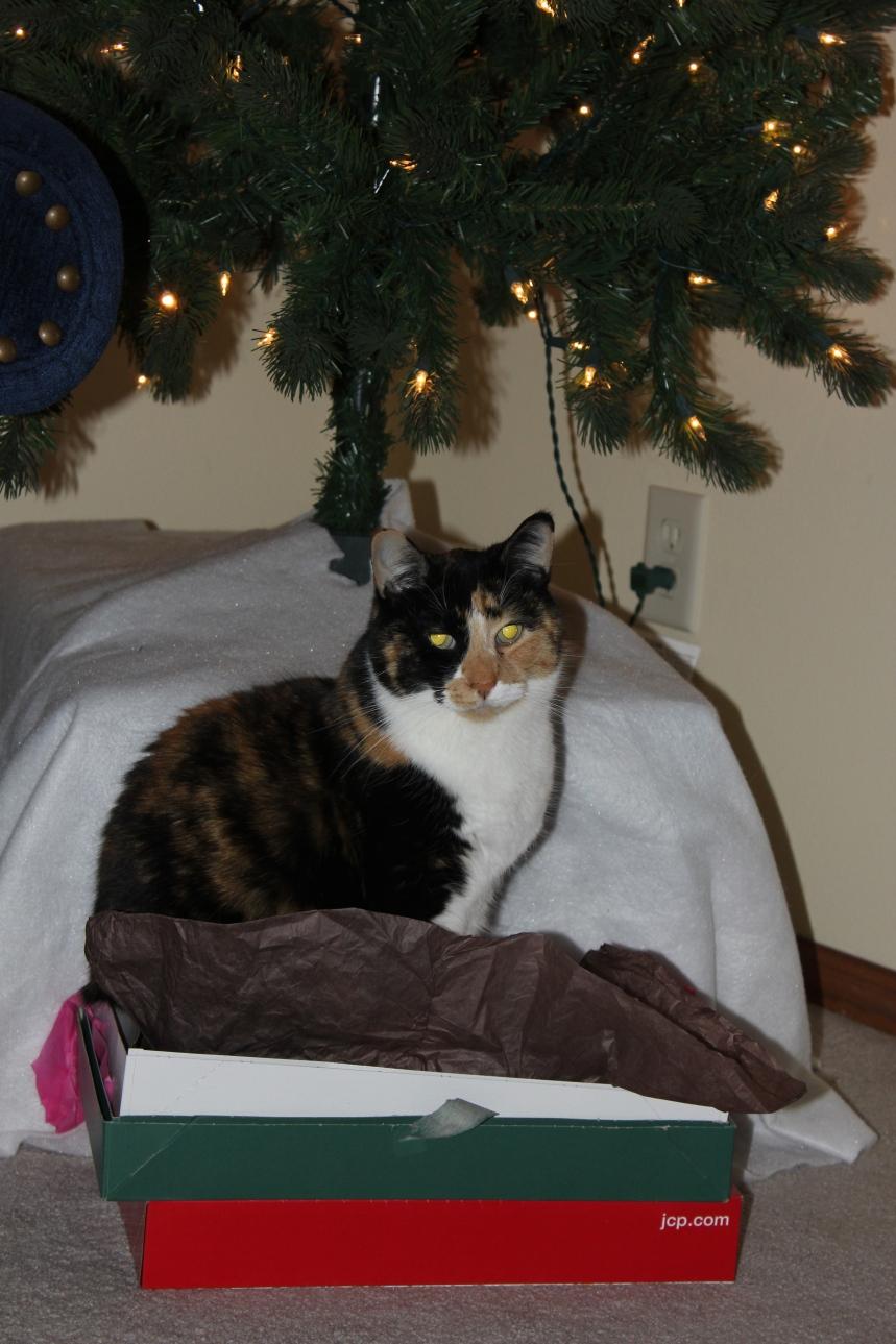 Callie cat likes presents