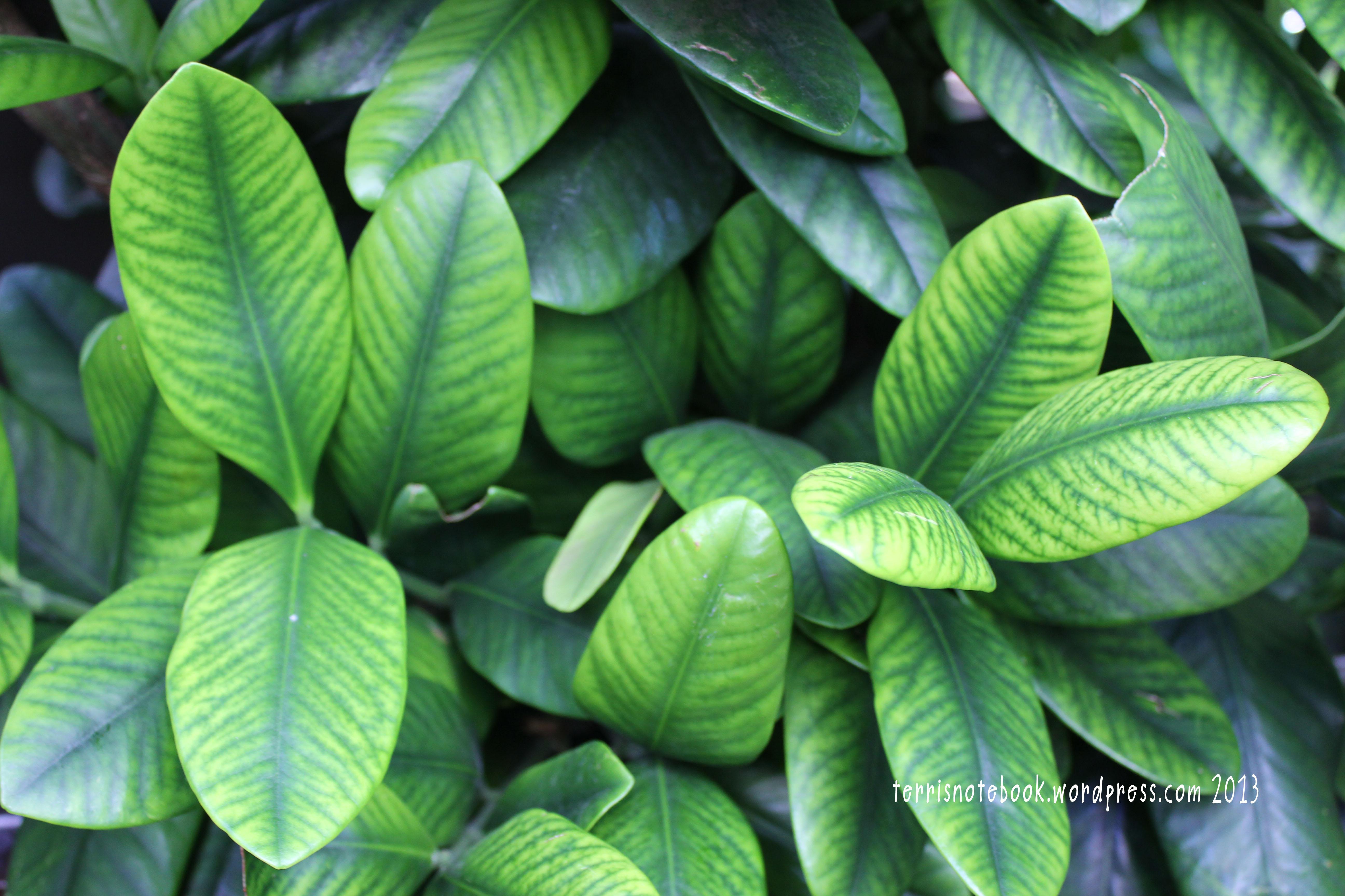 field trip botanical gardens in winter terri u0027s notebook