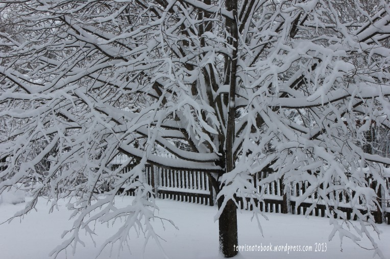 snowy tree branches