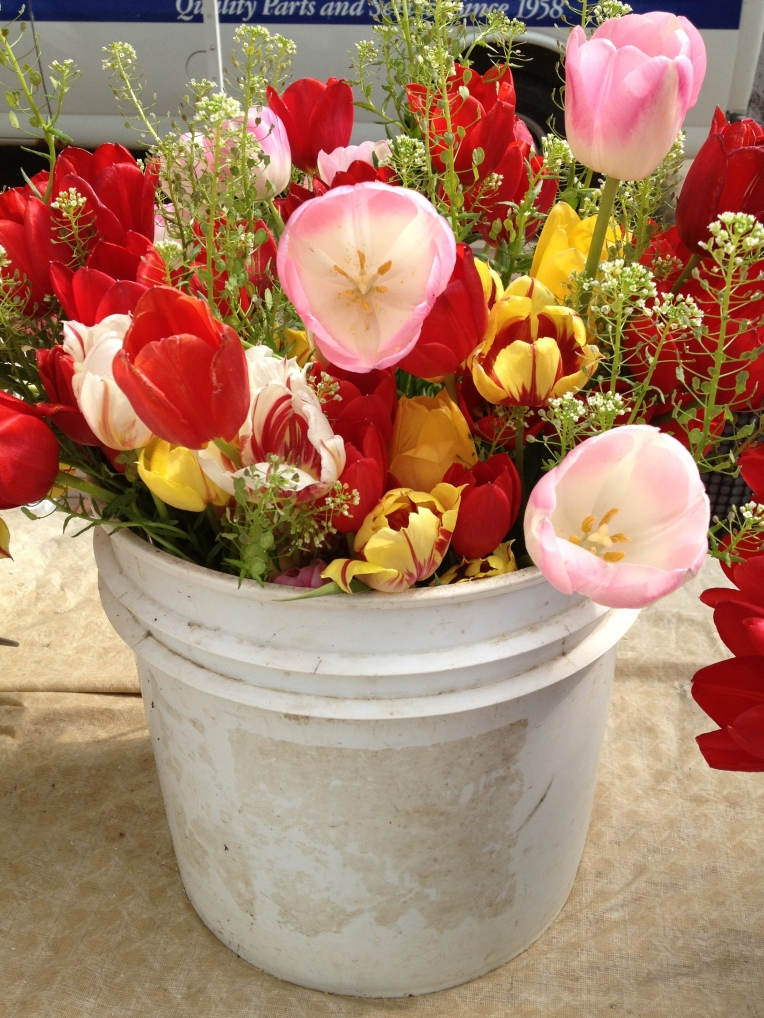 another bucket of tulips