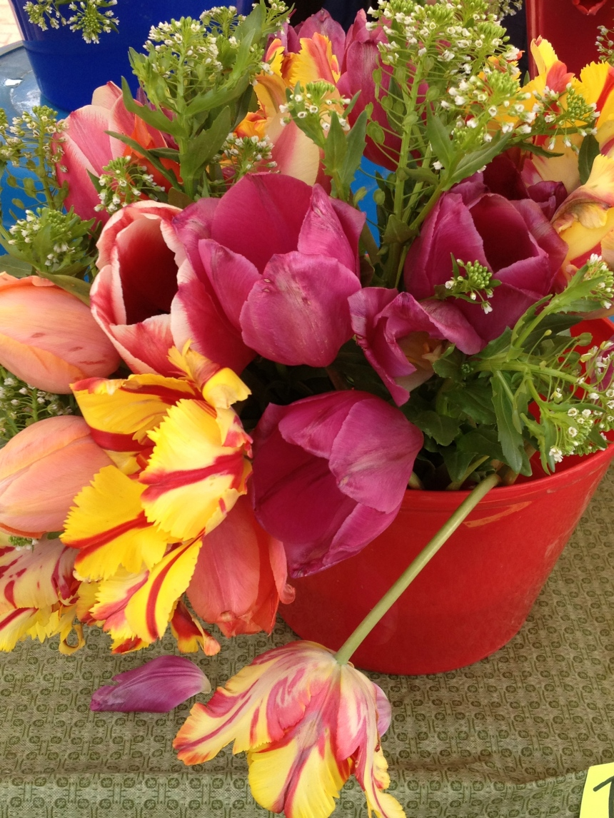 more tulips in a bucket