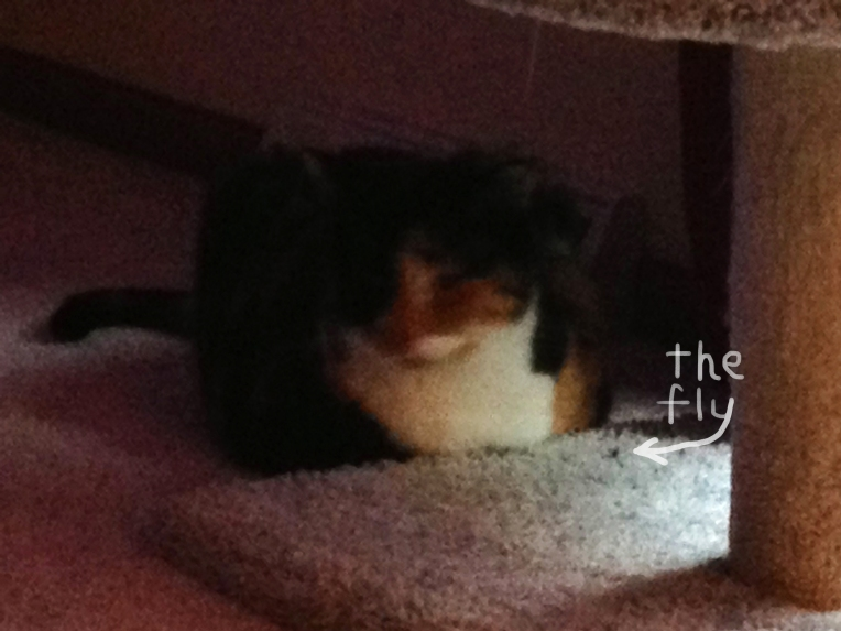 callie and her fly