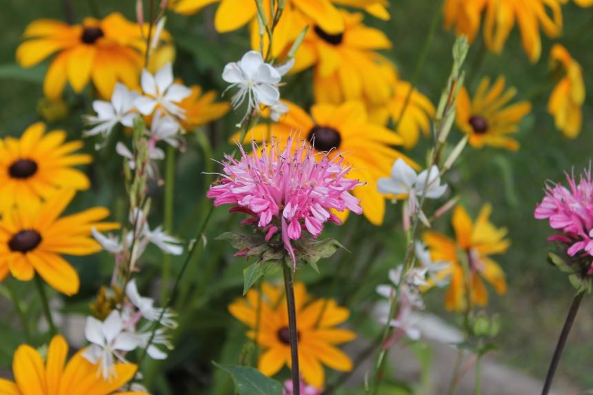 summer butterfly garden