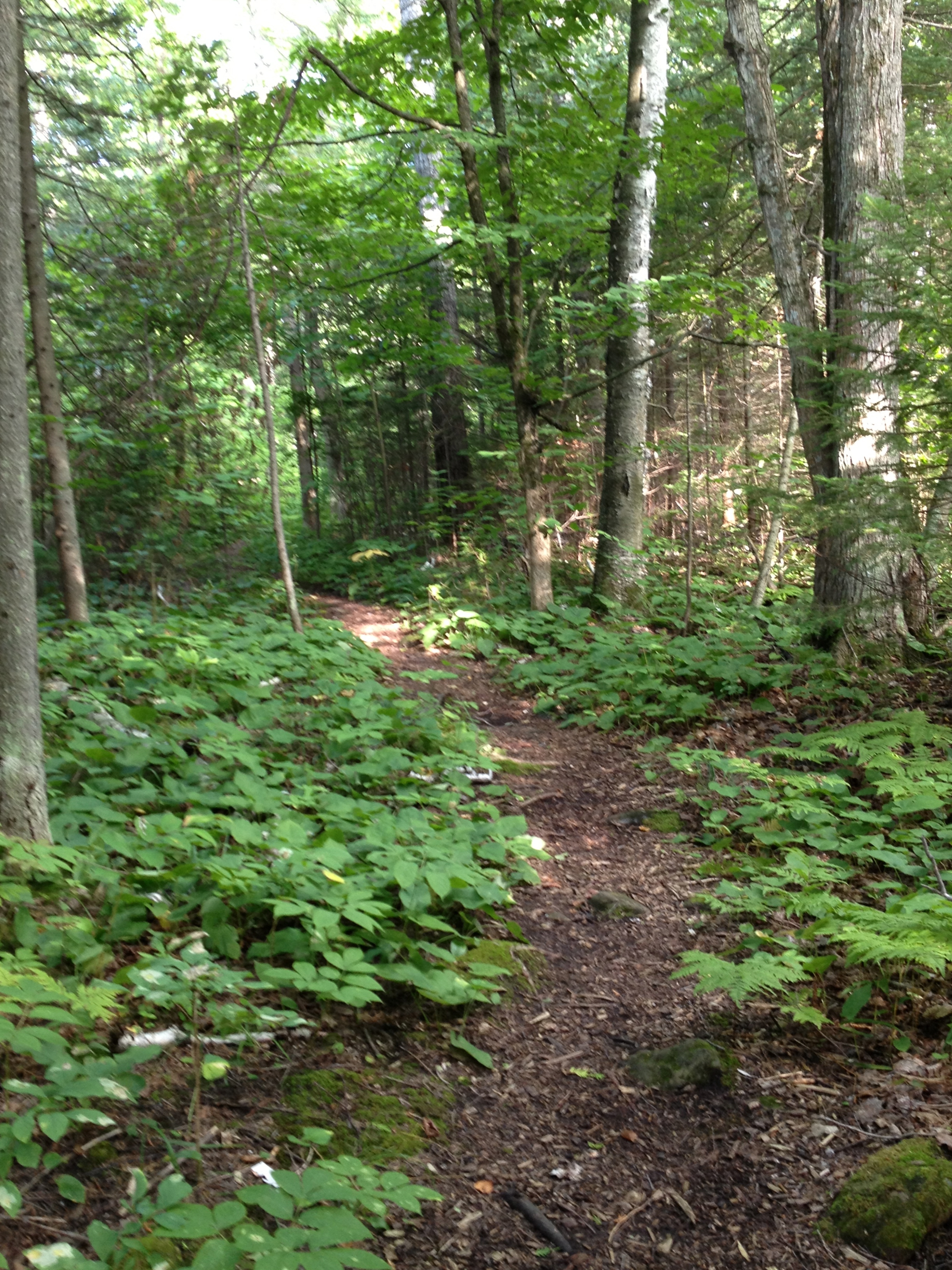 trail at the clearing