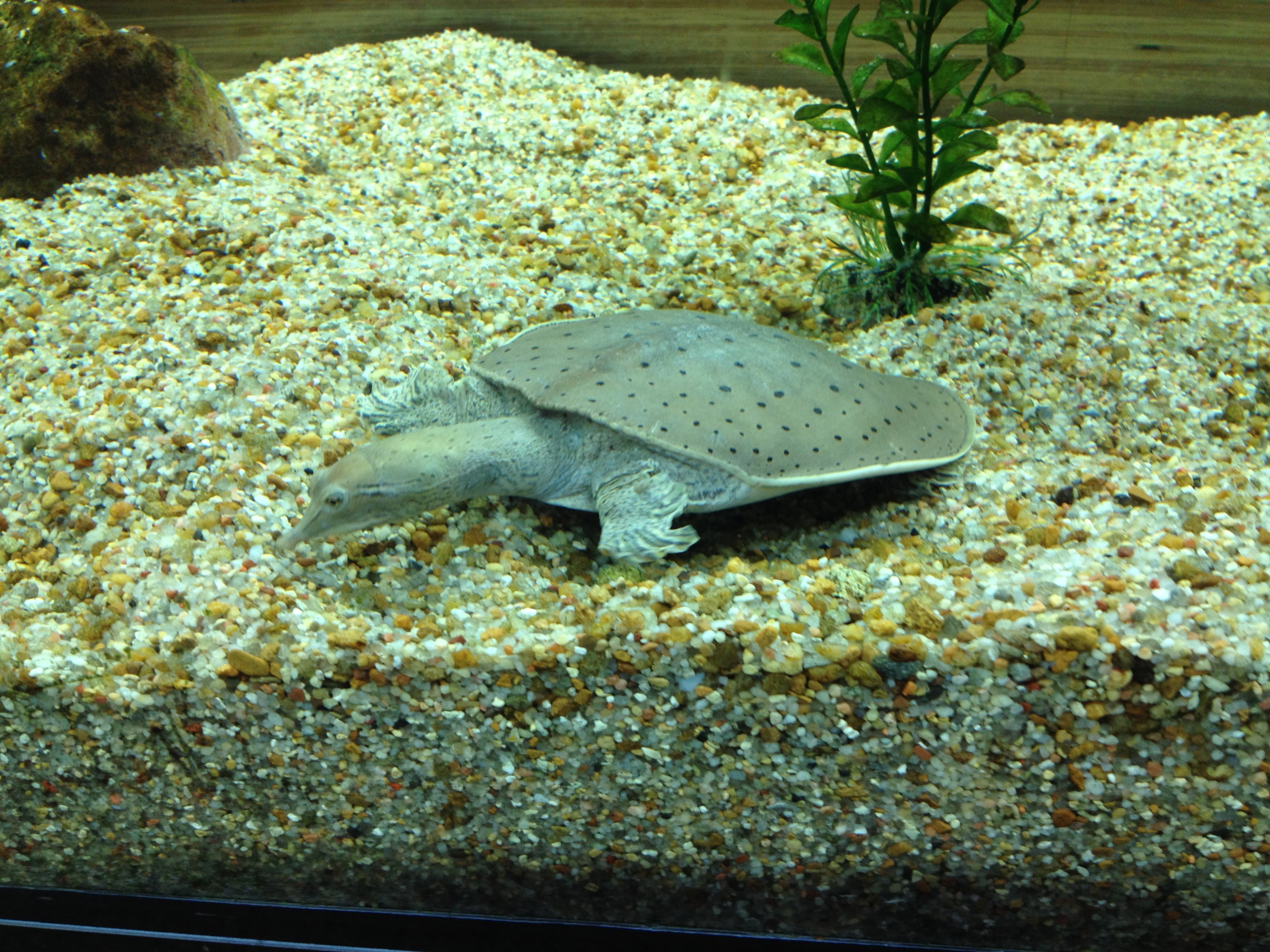 Freshwater aquarium fish milwaukee -  Advancements In Energy Production And A Cool Section Full Of Innovations In Engineering And Design Did You Know Milwaukee Is A Well Known For
