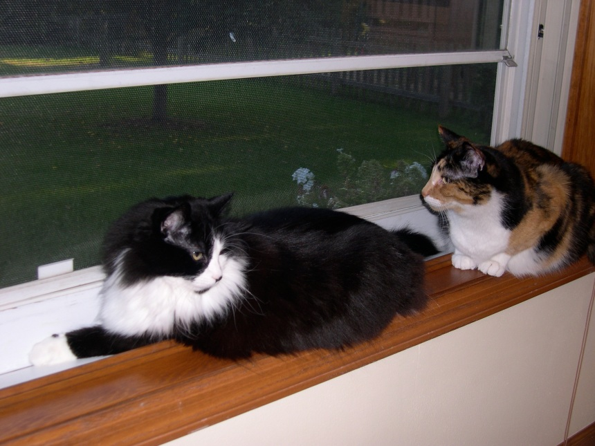 kitties in window sill