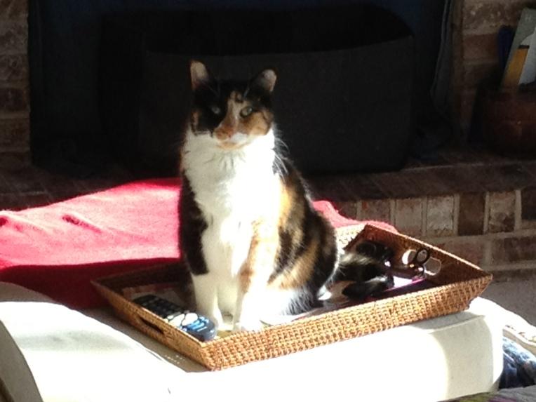 callie on the basket