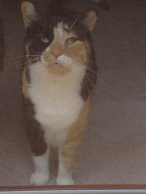 callie at the screen door