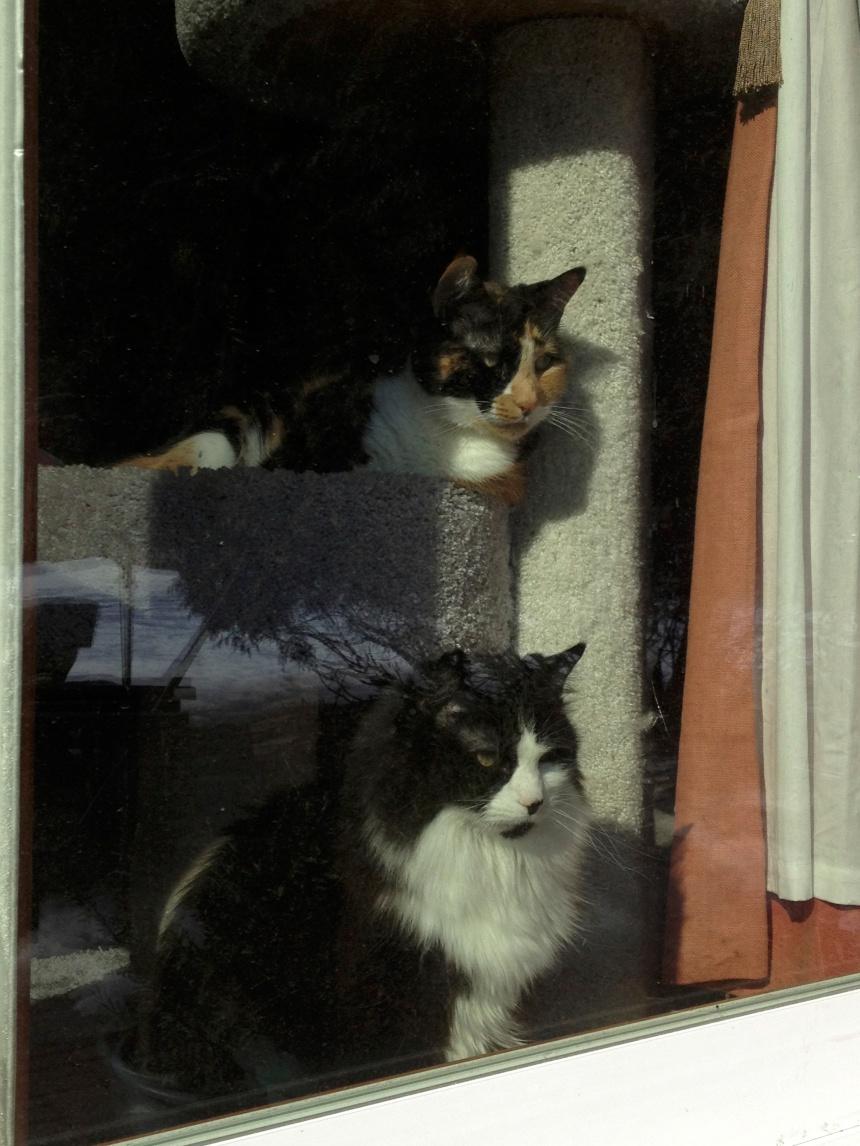 kitties looking outside