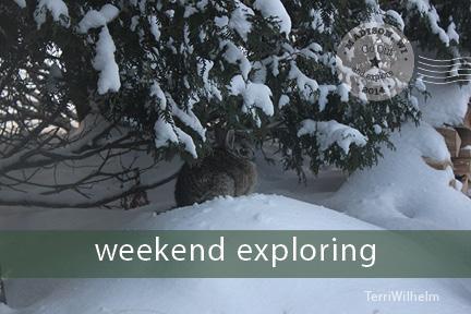 Weekend Postcard bunny
