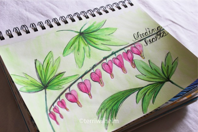 sketchbook page bleeding hearts