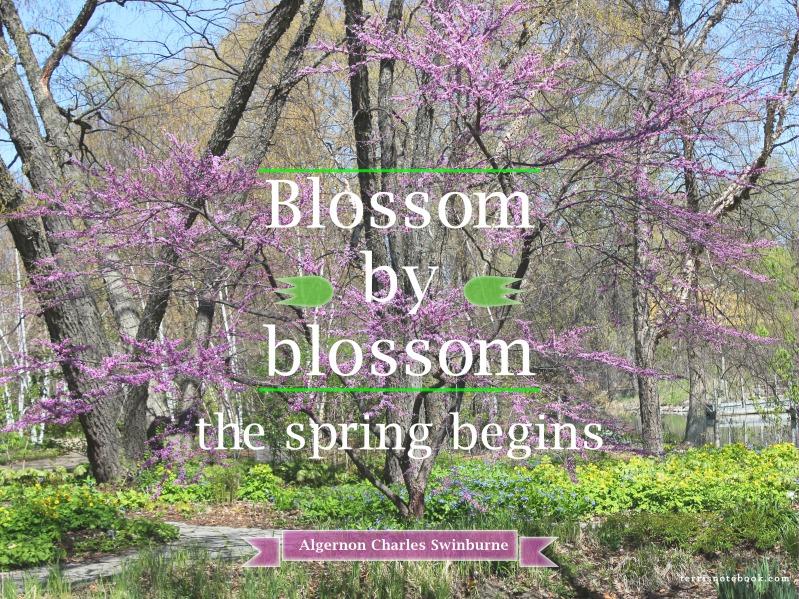 Blossom by Blossom