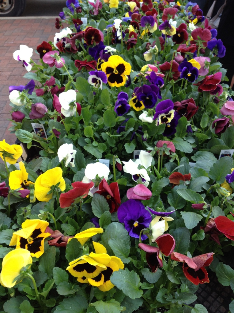 early pansies