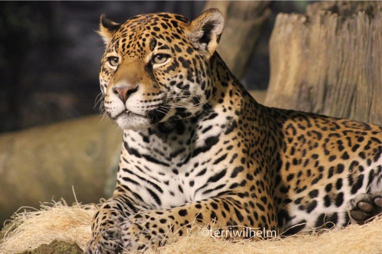 zoo.animals2