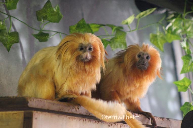 zoo.animals5