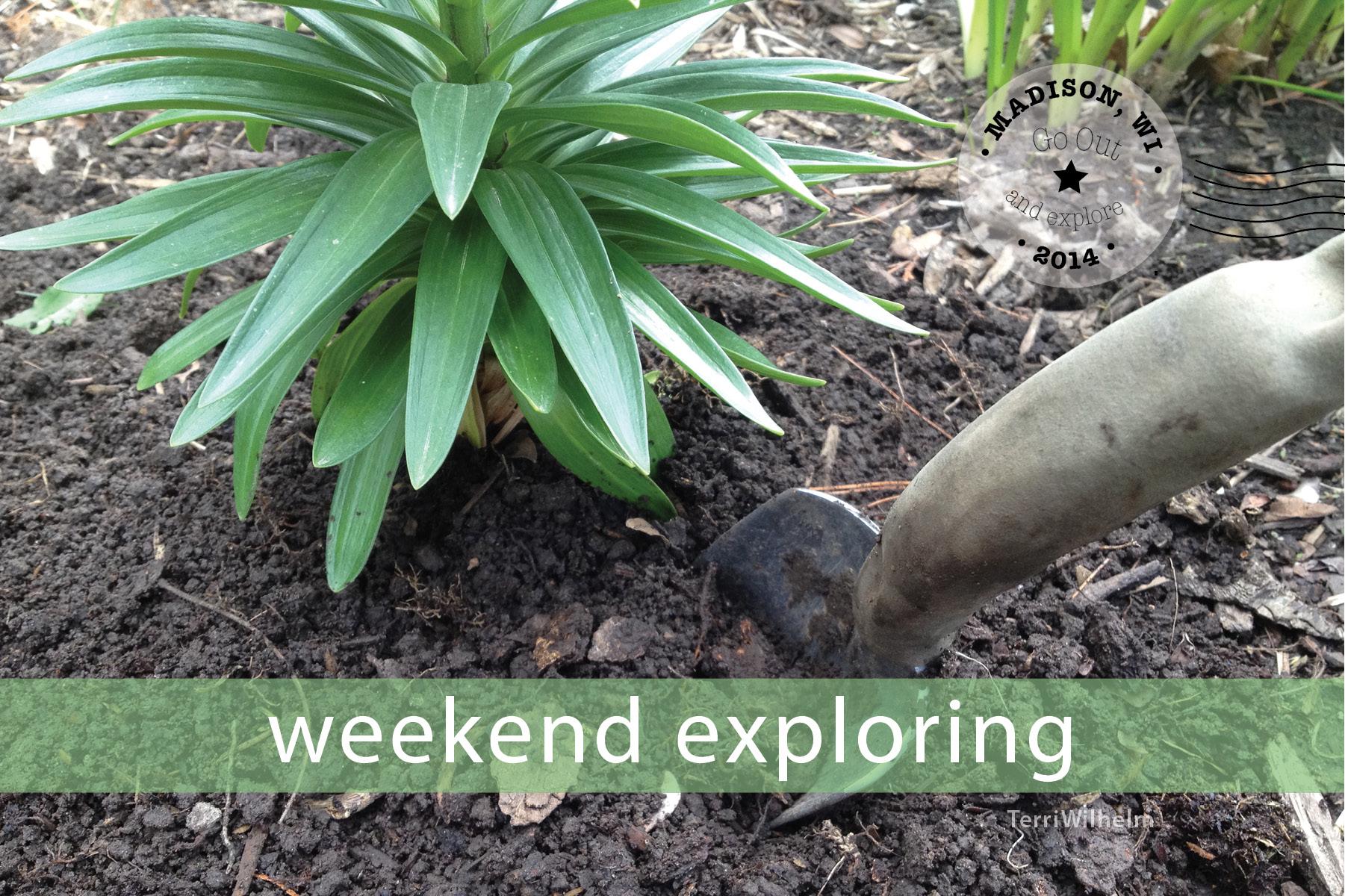 Weekend Postcard digging in the dirt