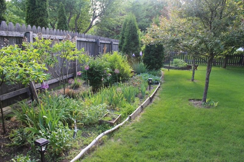 Backyard in June
