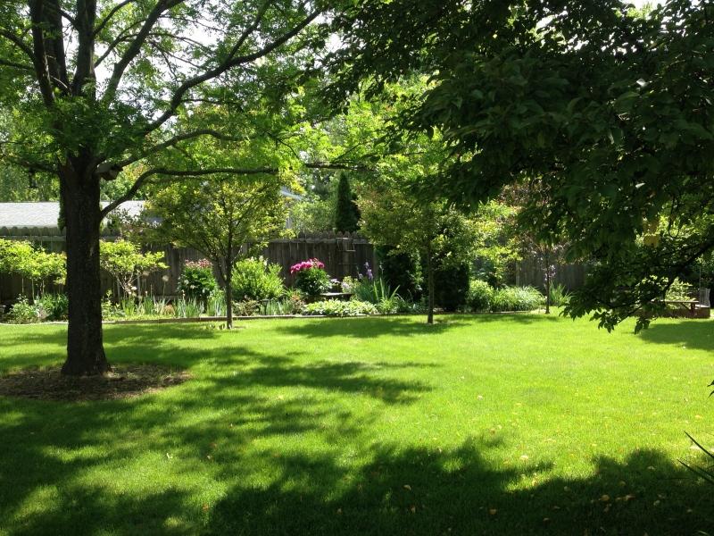 green backyard in june