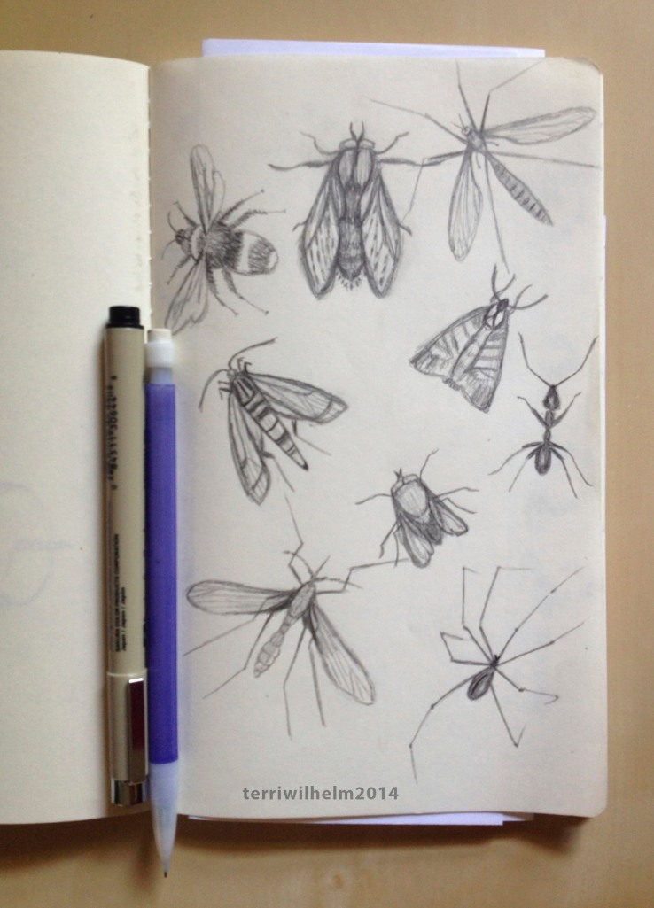 sketchbook bugs