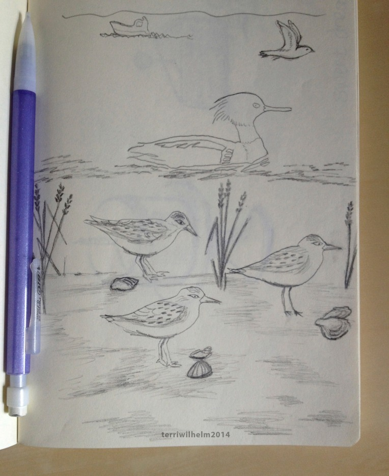 sketchbook shore birds