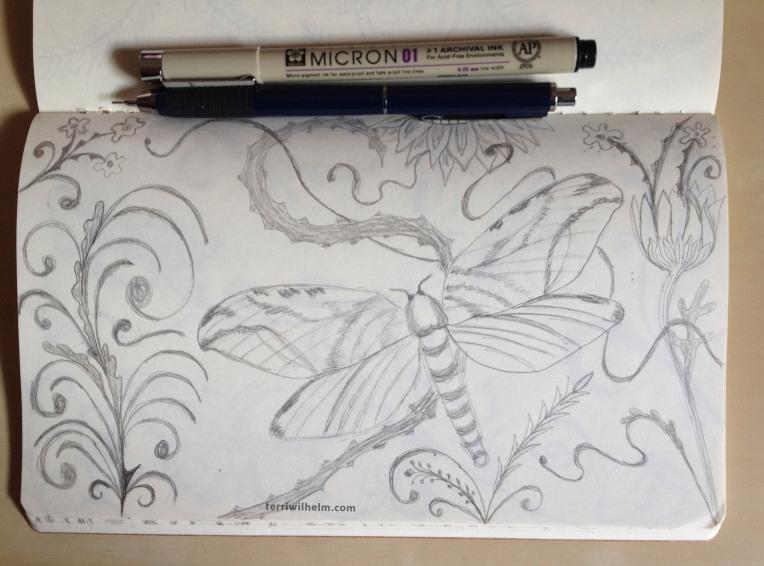 sketchbook moth