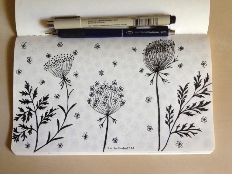 sketchbook queen annes lace