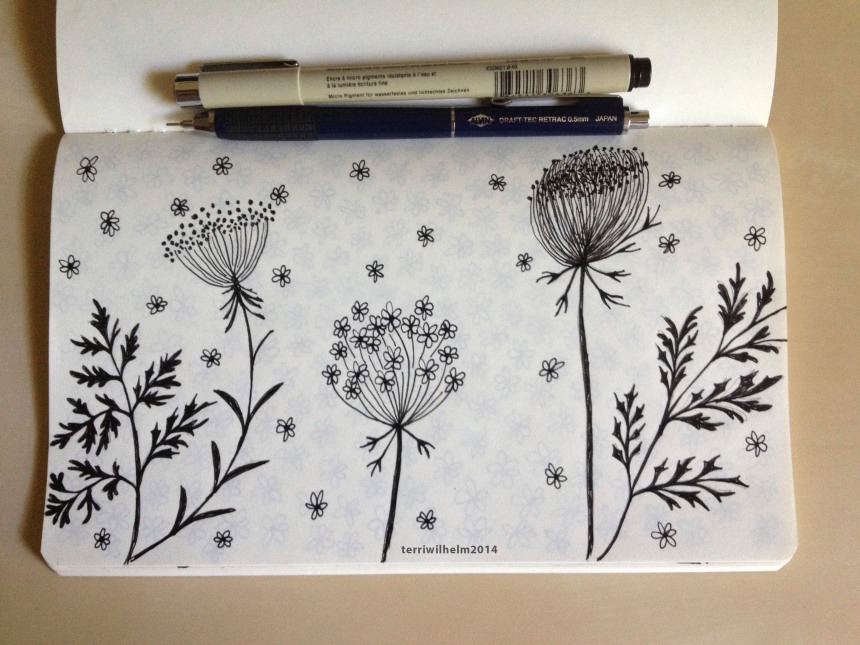 sketchbook queen annes lace