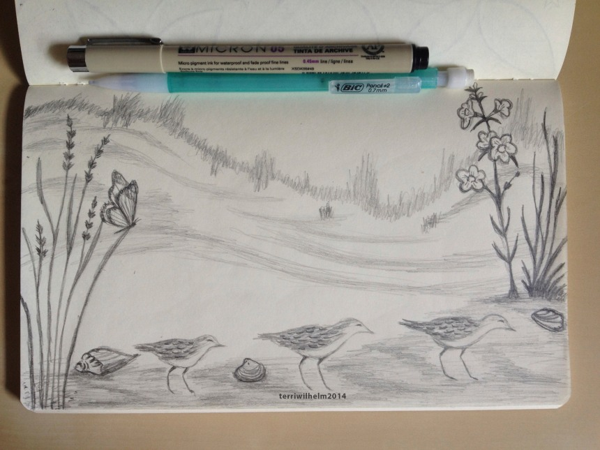 sketchbook shoreline dunes