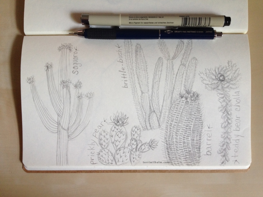 Sketchbook Day 1-cactus