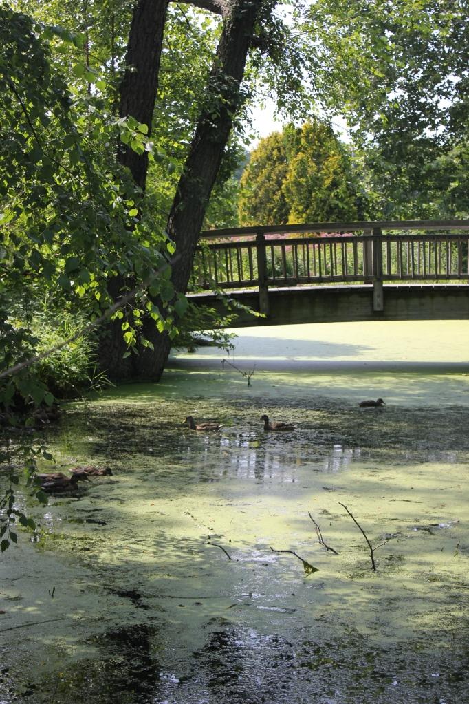 swamp at Olbrich Gardens