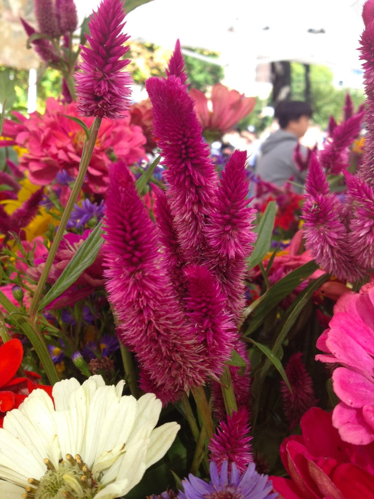 celosia intenz at the market