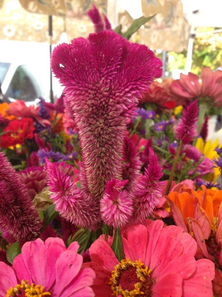 cockscomb flowers at the market